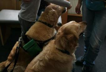 Terápiás kutyák segítik munkánkat